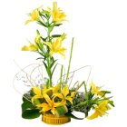 Fragrant 6 Stemmed Yellow Lilies in a Beautiful Cluster