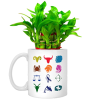 Gorgeous Gift of Sunsign Mug planted with Lucky Bamboo Tree