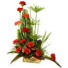 Clustered Array of One Dozen Carnations