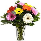 Gorgeous Mixed Gerberas in a Glass Vase to Bevuar