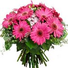 Divine Bunch of Pink Gerberas to Vidyaranyapura Lsg SO