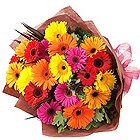Cheerful Gerberas Bouquet in Beautiful Mixed Colours<br>