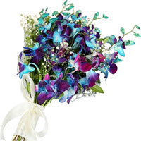 Striking Bunch of Blue Orchids