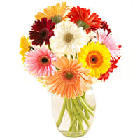 Extravagant Vase of 12 Mixed Gerberas Beauty