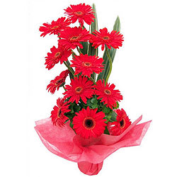 Precious Bouquet of Gerberas in Red Colour