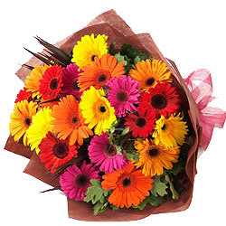 Majestic Gift of Fifteen Multi-hued Gerberas Bunch