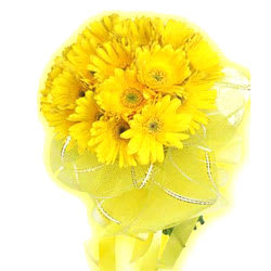 Regal Sunshine Presentation of 15 Gerberas of Yellow Colour