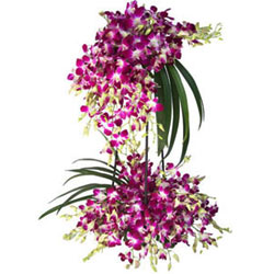 Summer Delight Tall Bouquet of 30 Stems of Orchid