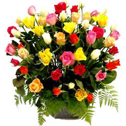 Gorgeous Basket of Mixed Coloured Roses Collection