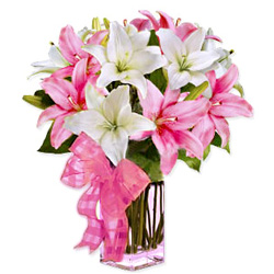 Endearing Collection of Spectacular Lilies