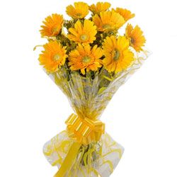 Enchanting Yellow Gerberas Bunch
