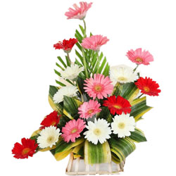 Breathtaking Arrangement of One Doz Assorted Gerberas