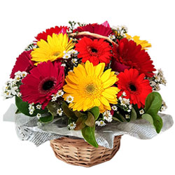 Designer Basket of Assorted Gerberas