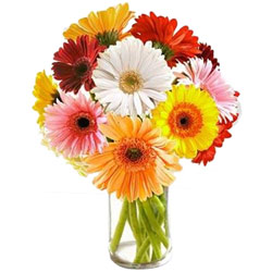 Striking Assorted Gerberas arranged in a Glass Vase