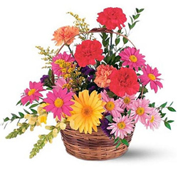 Radiant Carnations and Gerberas display in a Basket