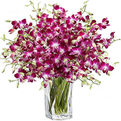 Exotic Orchids Presented in a Glass Vase
